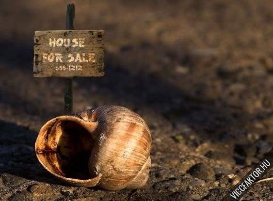 Ház jó állapotban eladó