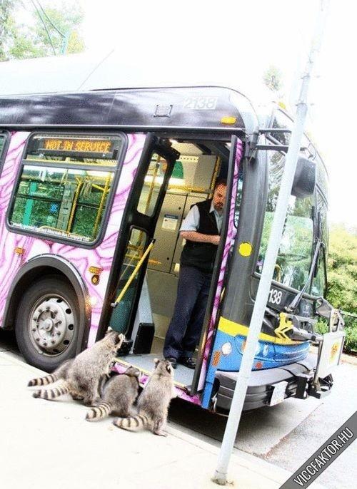 Az állatkert legújabb szolgáltatása