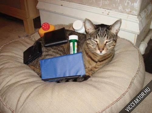 Macskák: ideális rájuk pakolni #1
