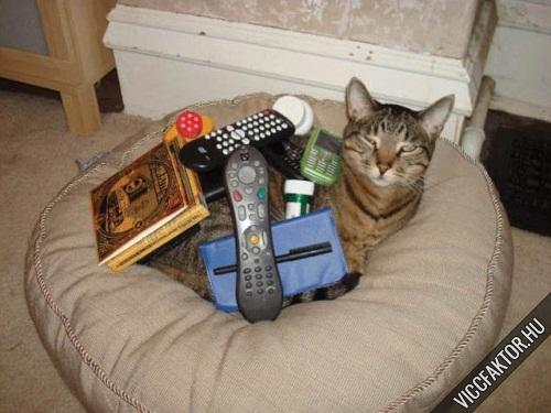 Macskák: ideális rájuk pakolni #2