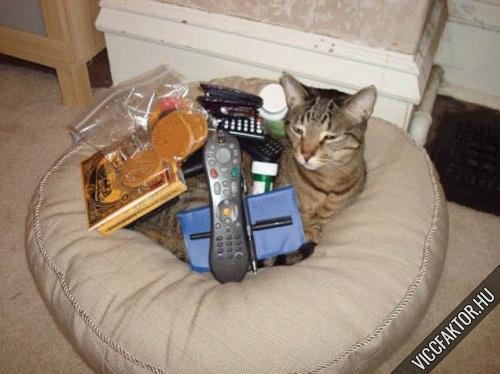 Macskák: ideális rájuk pakolni #3