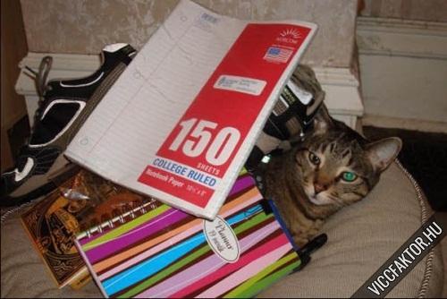 Macskák: ideális rájuk pakolni #4