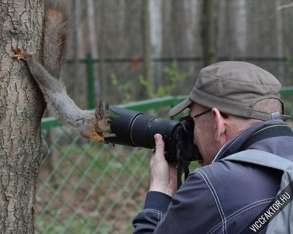Állatfotózás #2