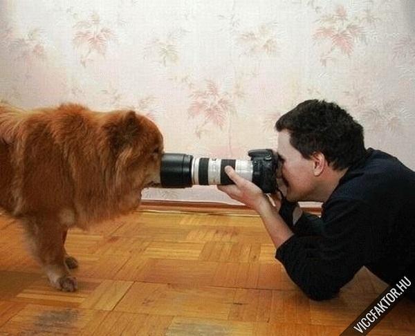 Állatfotózás #3