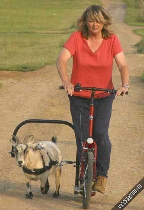 Spéci bicikli