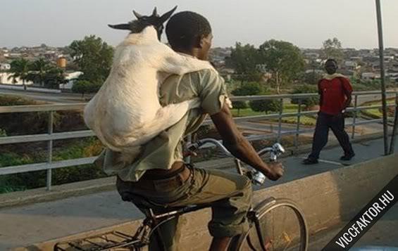 Mi fér el egy biciklin? #1