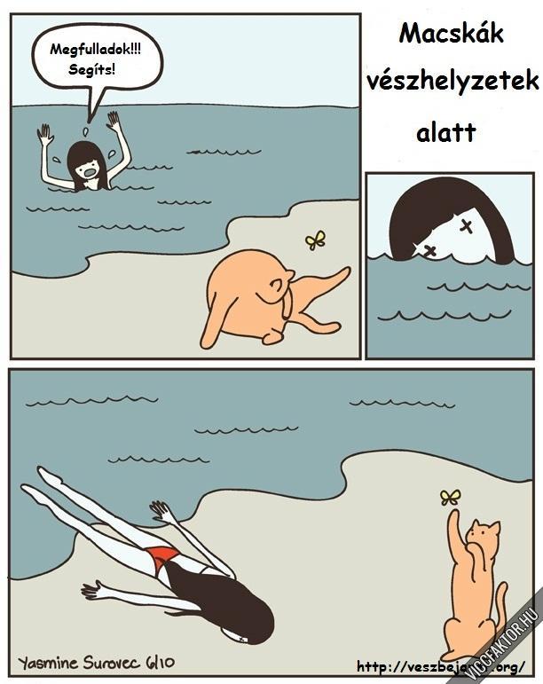 Vészhelyzetek, macskák