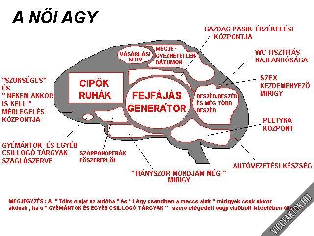 A női agy