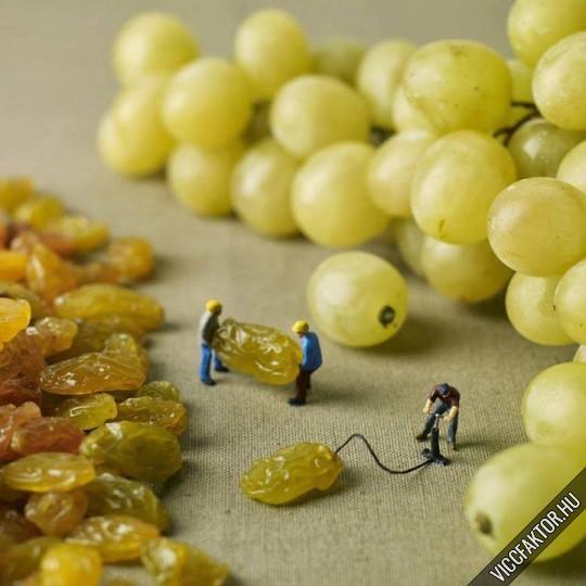 Hogyan készül a szőlő, vagy a mazsola