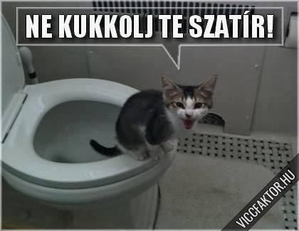 Mikor egy macska Wc-n van