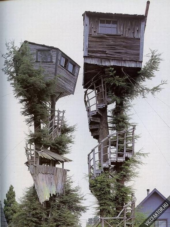 Legmenőbb fára épített ház