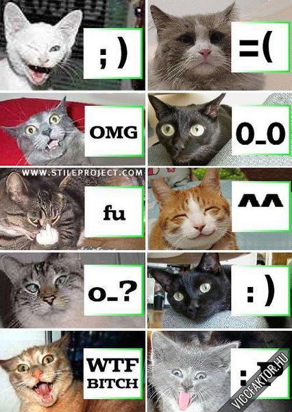 Macska smileyk