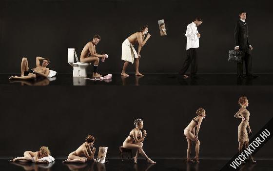 Napi evolúció