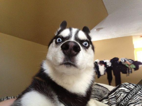 Amikor közlöm a kutyámmal, hogy elfogyott a kajája