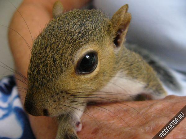 Egy mókus élete