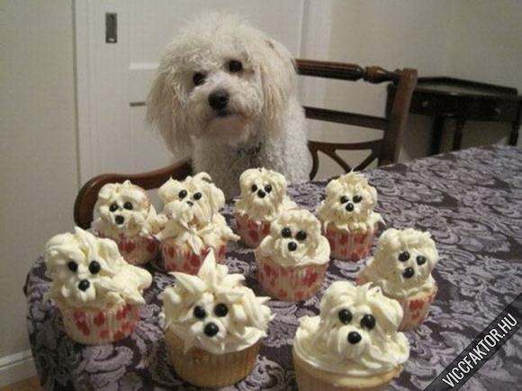 Kutya muffin