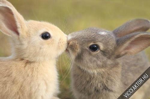 Nyuszi puszi