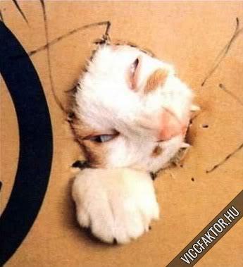Macskafajták #1