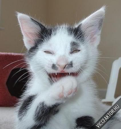 Macskafajták #10