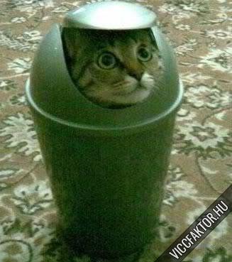 Macskafajták #11