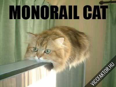 Macskafajták #15