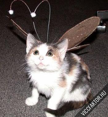 Macskafajták #2