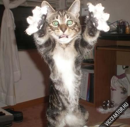Macskafajták #5