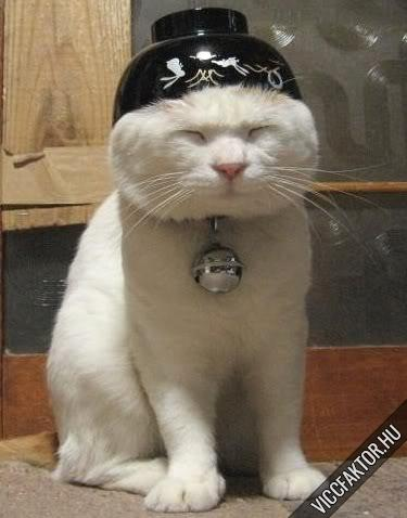 Macskafajták #7