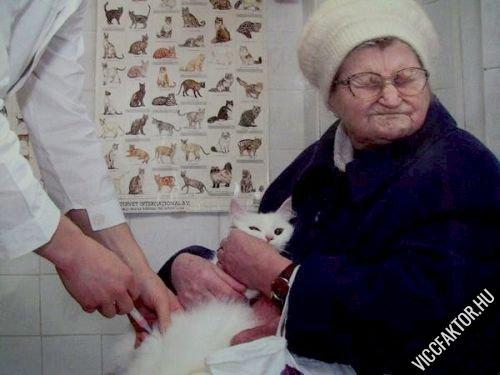 Állatorvosnál