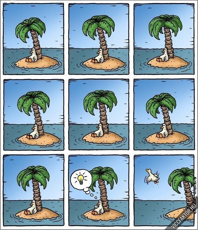 Egy kacsa története