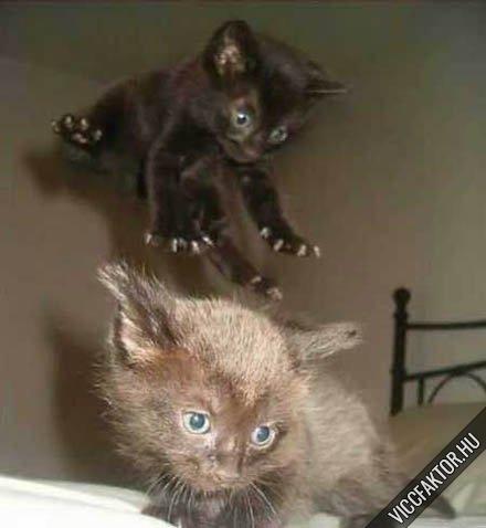 Kung Fu macska