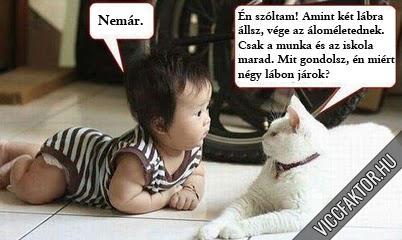 A bölcs macska