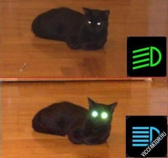 Reflektoros macska