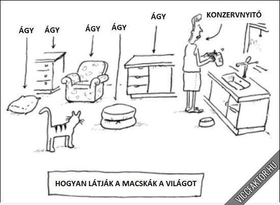 Macskakvilag