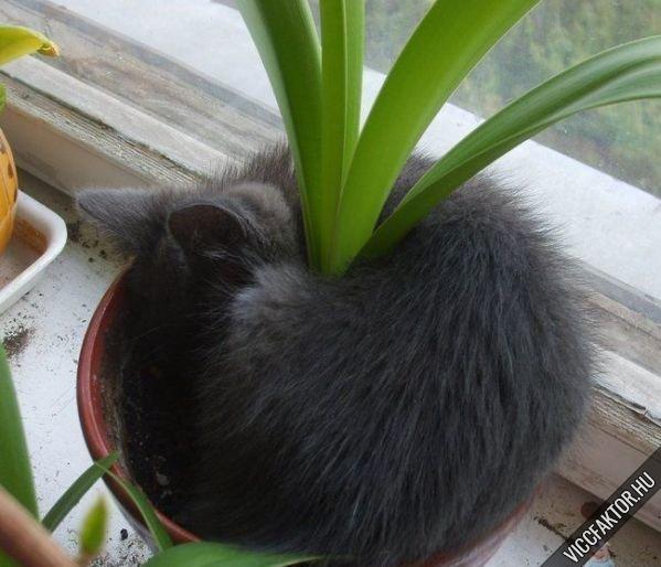 Macsek