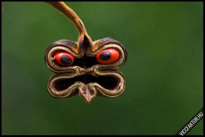 Mérges kígyó